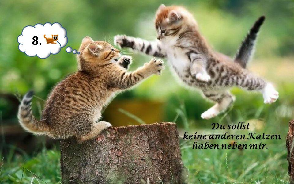 Du sollst deiner Katze dienen. 7.