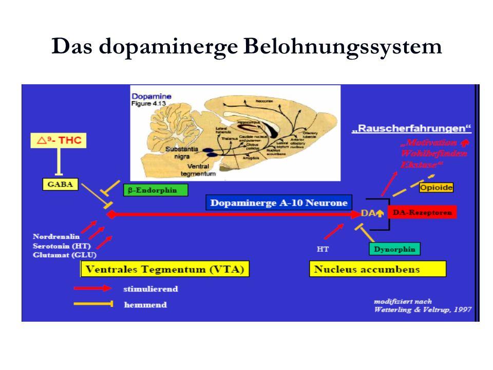 Karl C. Mayer www.neuro24.de Das dopaminerge Belohnungssystem