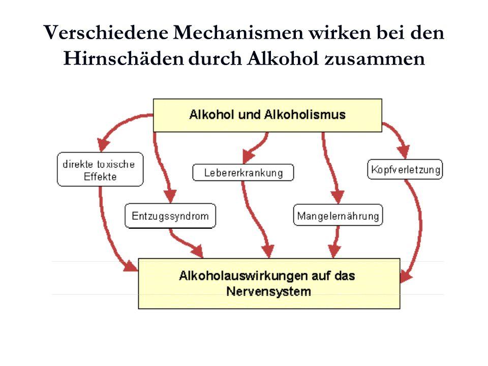 Karl C. Mayer www.neuro24.de Verschiedene Mechanismen wirken bei den Hirnschäden durch Alkohol zusammen