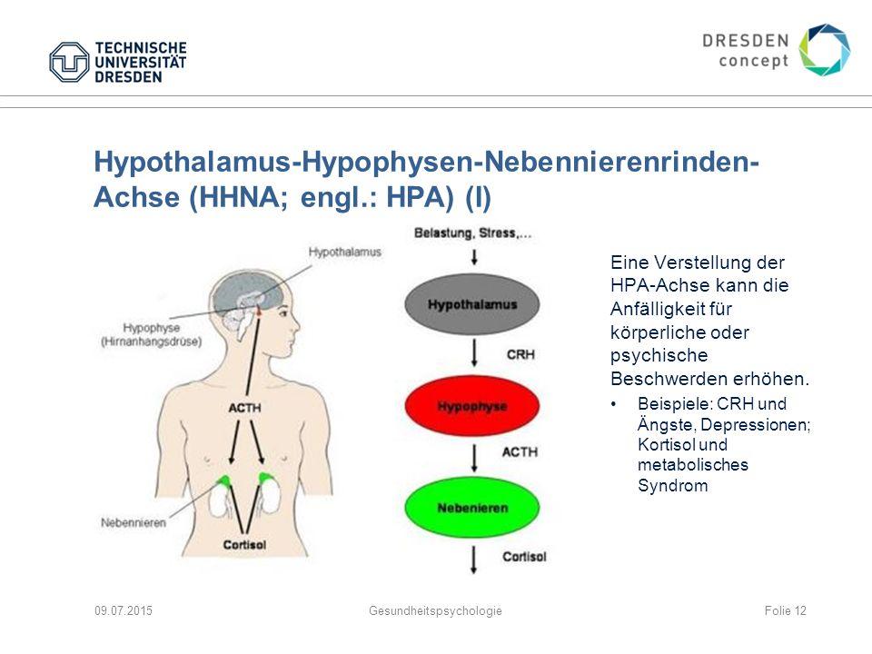 Hypothalamus-Hypophysen-Nebennierenrinden- Achse (HHNA; engl.: HPA) (I) 09.07.2015Gesundheitspsychologie Eine Verstellung der HPA-Achse kann die Anfäl