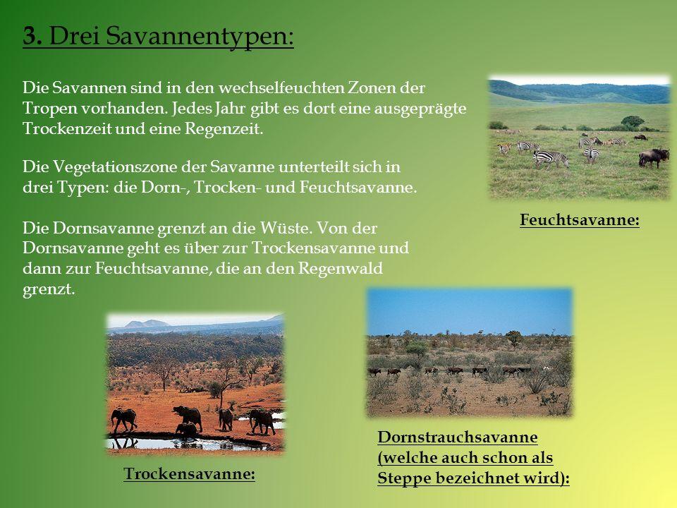 3. Drei Savannentypen: Die Savannen sind in den wechselfeuchten Zonen der Tropen vorhanden. Jedes Jahr gibt es dort eine ausgeprägte Trockenzeit und e