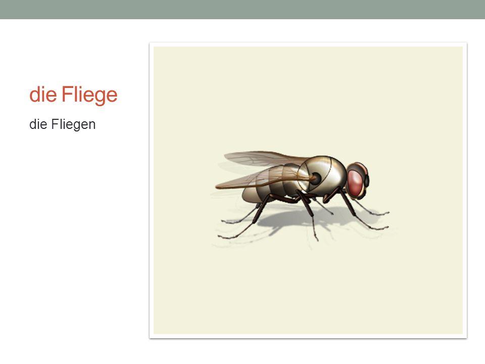 die Fliege die Fliegen