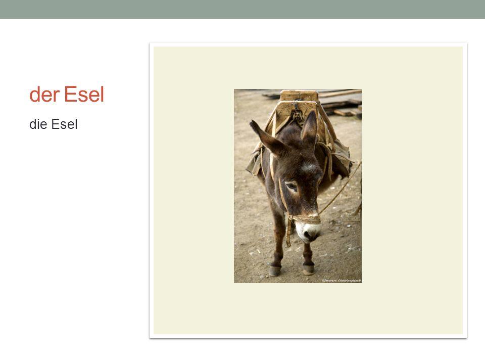 der Esel die Esel