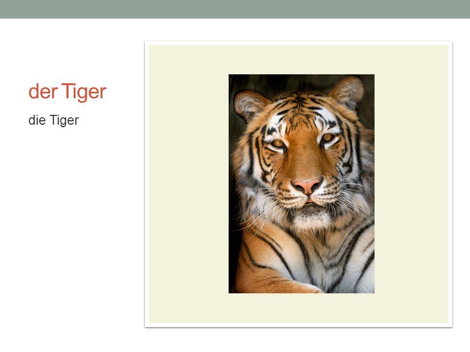 der Tiger die Tiger