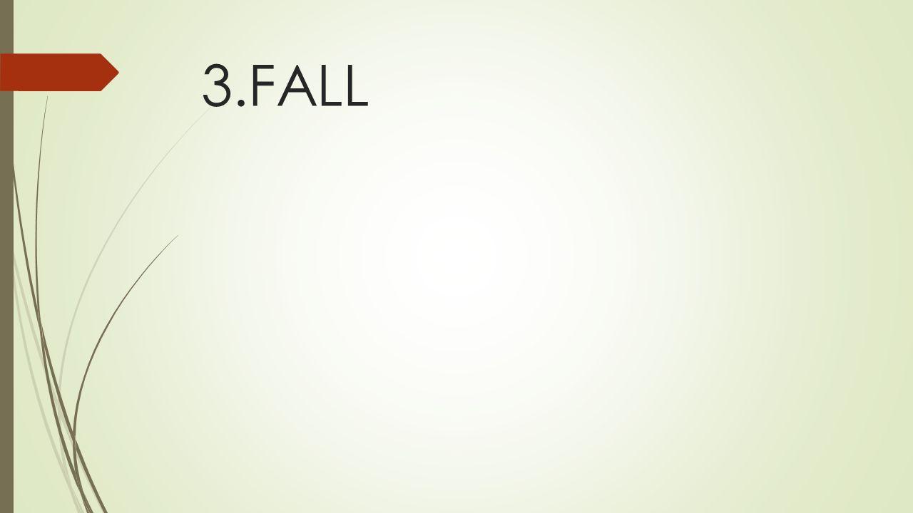 3.FALL