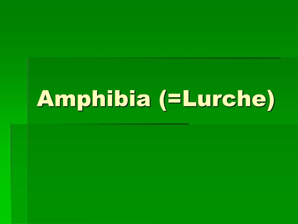 Amphibia (=Lurche)