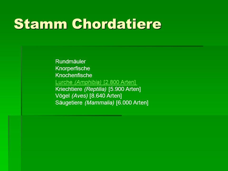 Stamm Chordatiere Rundmäuler Knorperfische Knochenfische Lurche (Amphibia) [2.800 Arten] Kriechtiere (Reptilia) [5.900 Arten] Vögel (Aves) [8.640 Arten] Säugetiere (Mammalia) [6.000 Arten] Lurche (Amphibia) [2.800 Arten]