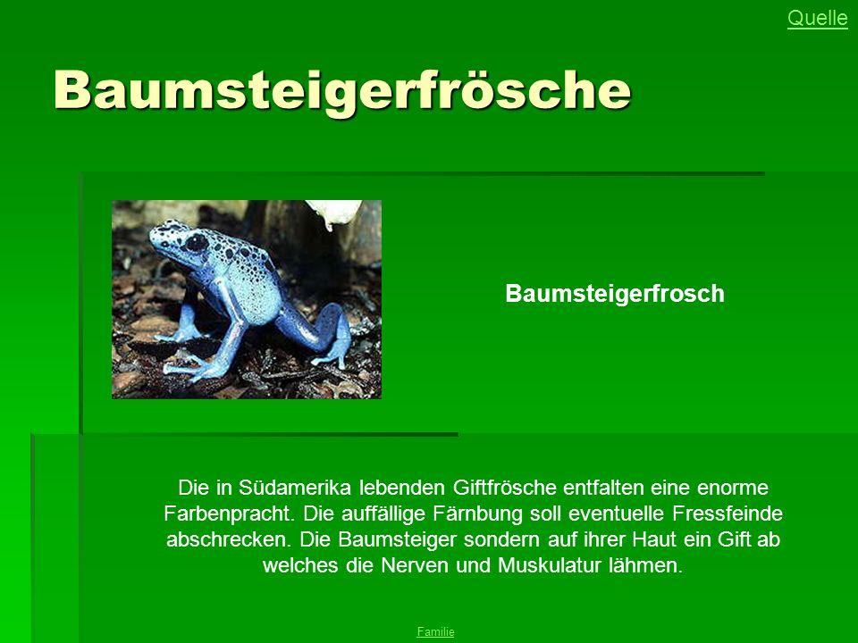 Baumsteigerfrösche Baumsteigerfrosch Die in Südamerika lebenden Giftfrösche entfalten eine enorme Farbenpracht. Die auffällige Färnbung soll eventuell