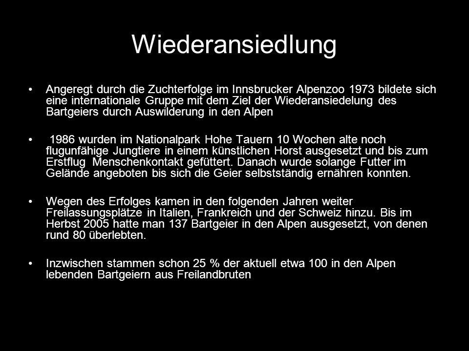 Wiederansiedlung Angeregt durch die Zuchterfolge im Innsbrucker Alpenzoo 1973 bildete sich eine internationale Gruppe mit dem Ziel der Wiederansiedelu