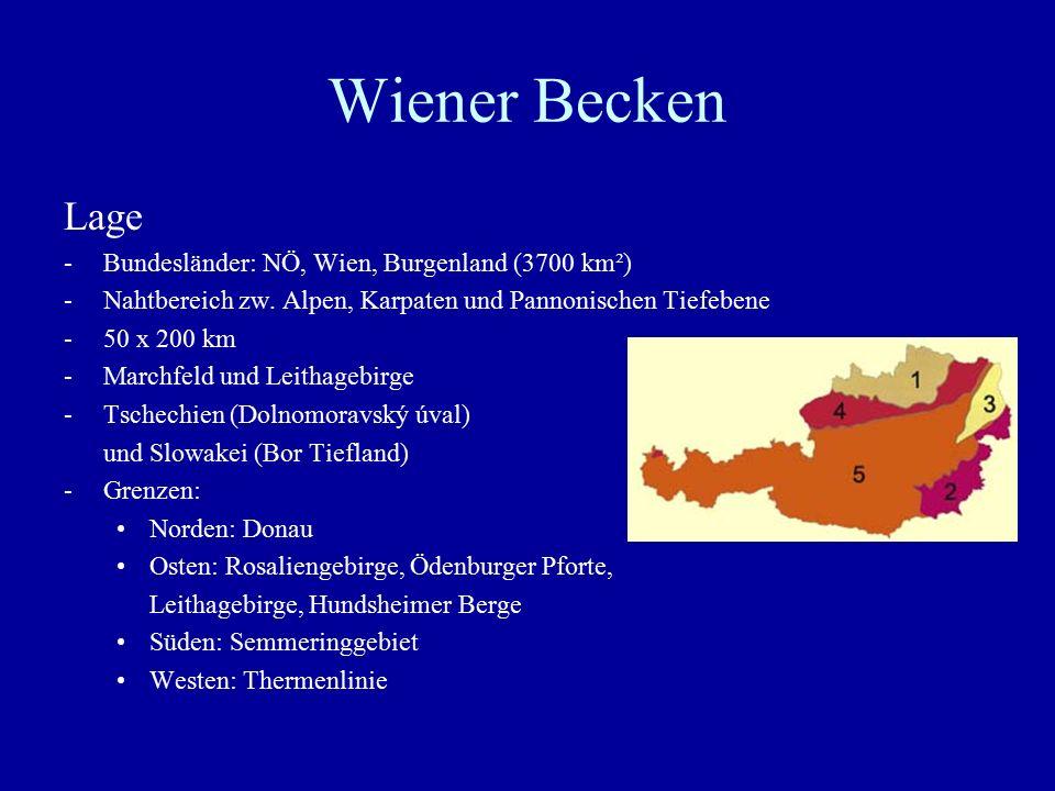 """Wiener Becken Landschaft -Südlich der Donau: Platten- und Hügelland mit Schotterplatten  fruchtbares Ackerland, Wald und Weingärten -""""Feuchte Ebene : Grundwasserspiegel nahe der Oberfläche (intensives Acker-, Obst- und Gartenbaugebiet) -Randzone (Thermenlinie): Weinbau, hydrothermale Quellen, Heilquellen etc."""