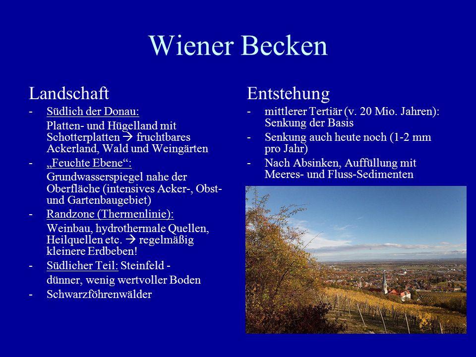 """Wiener Becken Landschaft -Südlich der Donau: Platten- und Hügelland mit Schotterplatten  fruchtbares Ackerland, Wald und Weingärten -""""Feuchte Ebene"""":"""