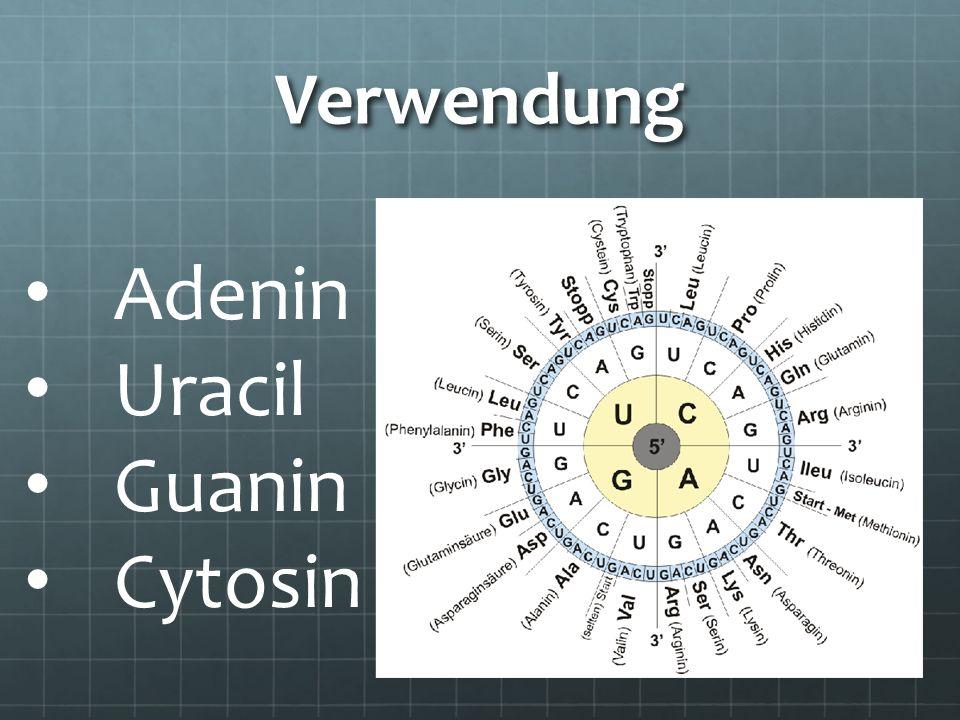 das mRNA-Stück in Codons (Triplets) einteilen das Anfangscodon AUG suchen (Methlonin) übersetzen der mRNA bis zu einem Stop-Codon (wird nicht übersetzt)