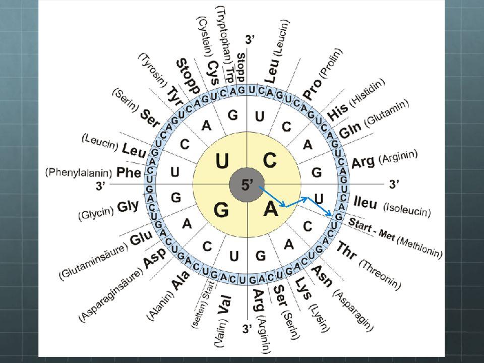 Danke für eure Aufmerksamkeit am Ende alle Aminosäuren in ene Kette schreiben –FERTIG