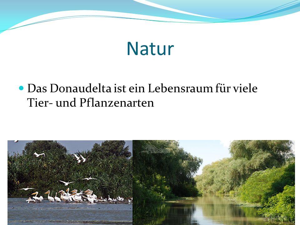 Natur Das Donaudelta ist ein Lebensraum für viele Tier- und Pflanzenarten