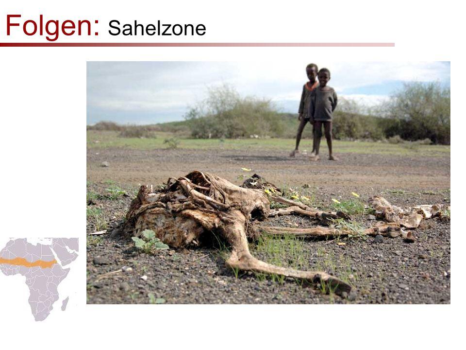 Folgen: Sahelzone