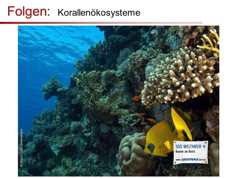 Folgen: Korallenökosysteme