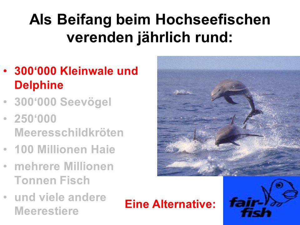 Als Beifang beim Hochseefischen verenden jährlich rund: 300'000 Kleinwale und Delphine 300'000 Seevögel 250'000 Meeresschildkröten 100 Millionen Haie
