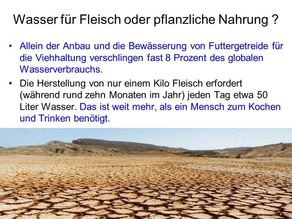 Wasser für Fleisch oder pflanzliche Nahrung ? Allein der Anbau und die Bewässerung von Futtergetreide für die Viehhaltung verschlingen fast 8 Prozent