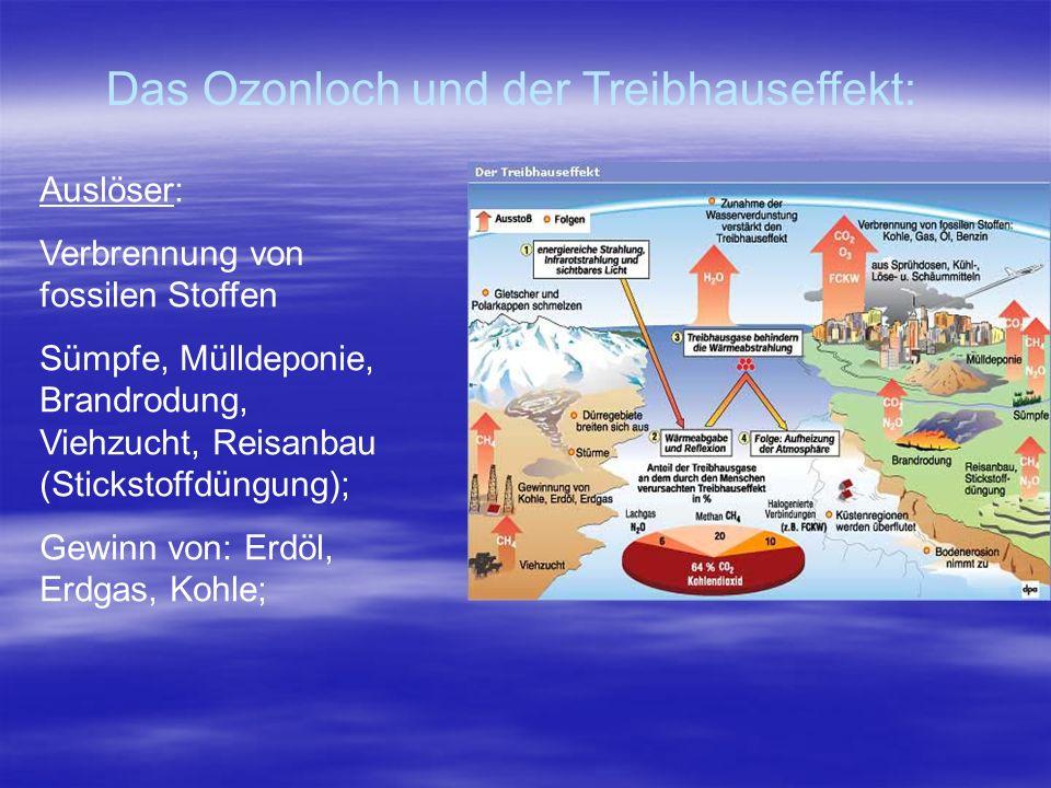 Das Ozonloch und der Treibhauseffekt: Auslöser: Verbrennung von fossilen Stoffen Sümpfe, Mülldeponie, Brandrodung, Viehzucht, Reisanbau (Stickstoffdün