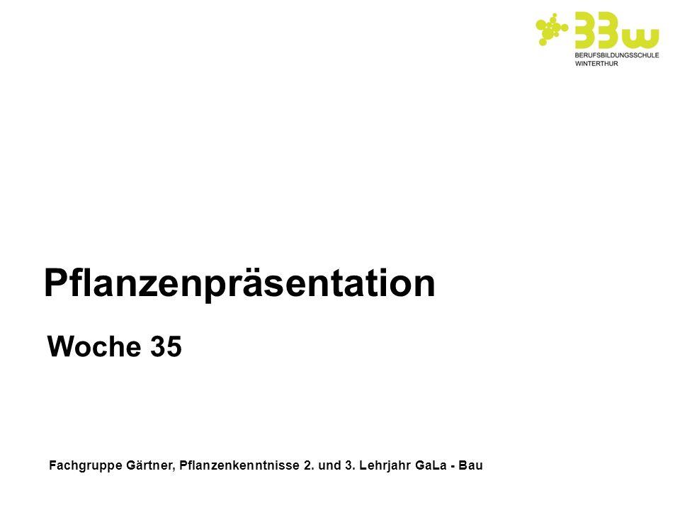 Fachgruppe Gärtner, Pflanzenkenntnisse 2. und 3. Lehrjahr GaLa - Bau Pflanzenpräsentation Woche 35
