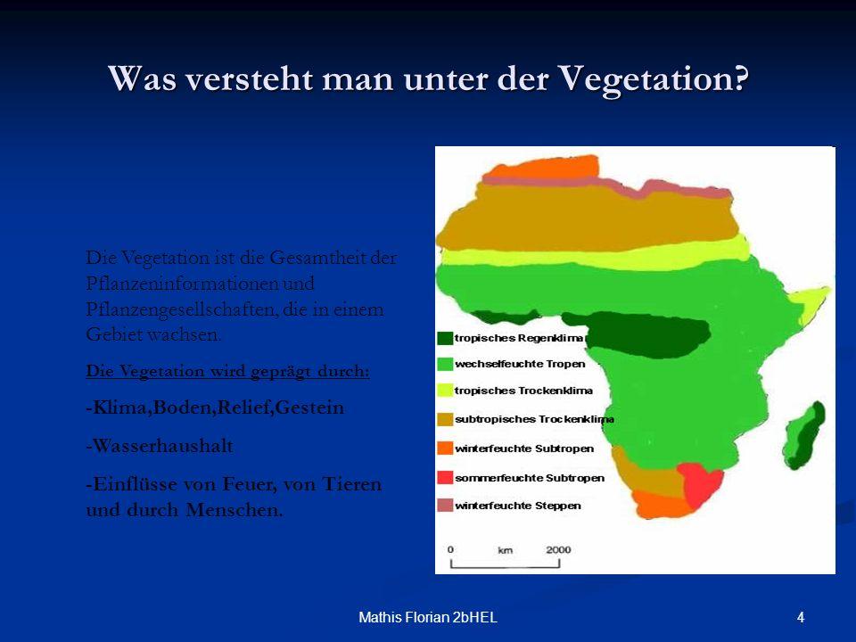 4Mathis Florian 2bHEL Was versteht man unter der Vegetation? Die Vegetation ist die Gesamtheit der Pflanzeninformationen und Pflanzengesellschaften, d