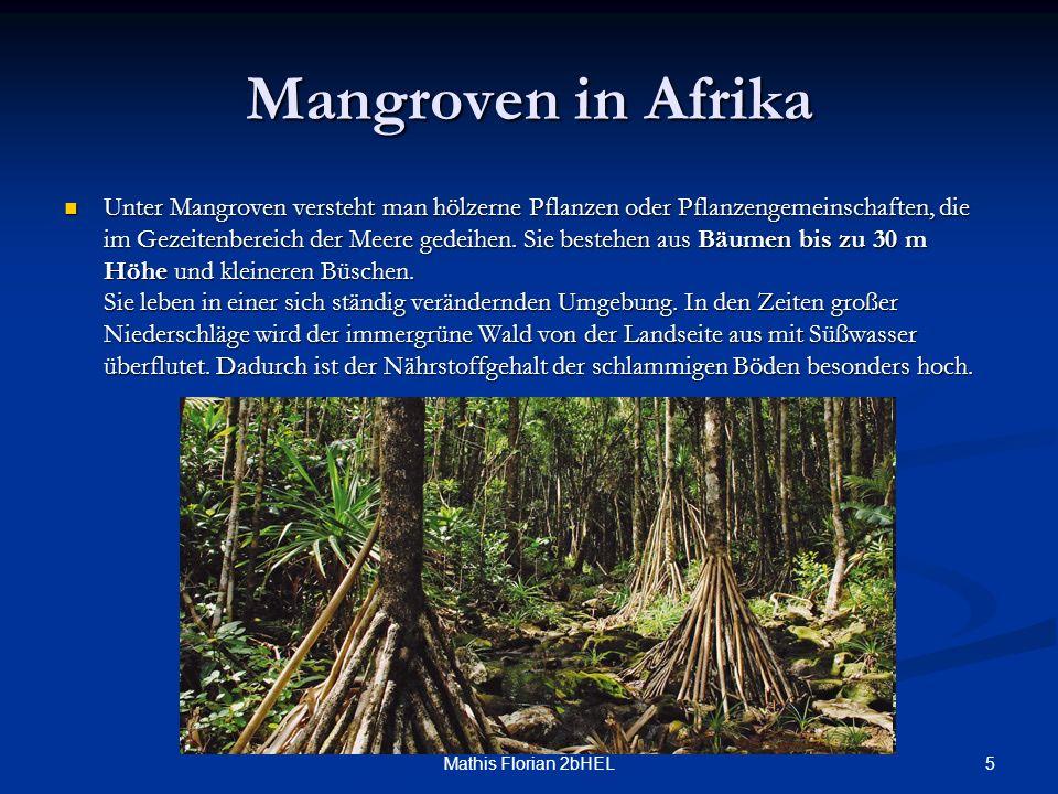 5Mathis Florian 2bHEL Mangroven in Afrika Unter Mangroven versteht man hölzerne Pflanzen oder Pflanzengemeinschaften, die im Gezeitenbereich der Meere