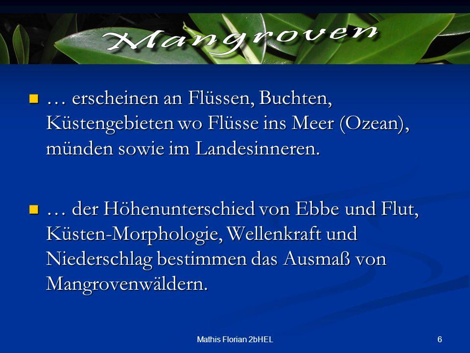 6Mathis Florian 2bHEL … erscheinen an Flüssen, Buchten, Küstengebieten wo Flüsse ins Meer (Ozean), münden sowie im Landesinneren. … erscheinen an Flüs