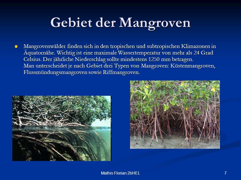7Mathis Florian 2bHEL Gebiet der Mangroven Mangrovenwälder finden sich in den tropischen und subtropischen Klimazonen in Äquatornähe. Wichtig ist eine