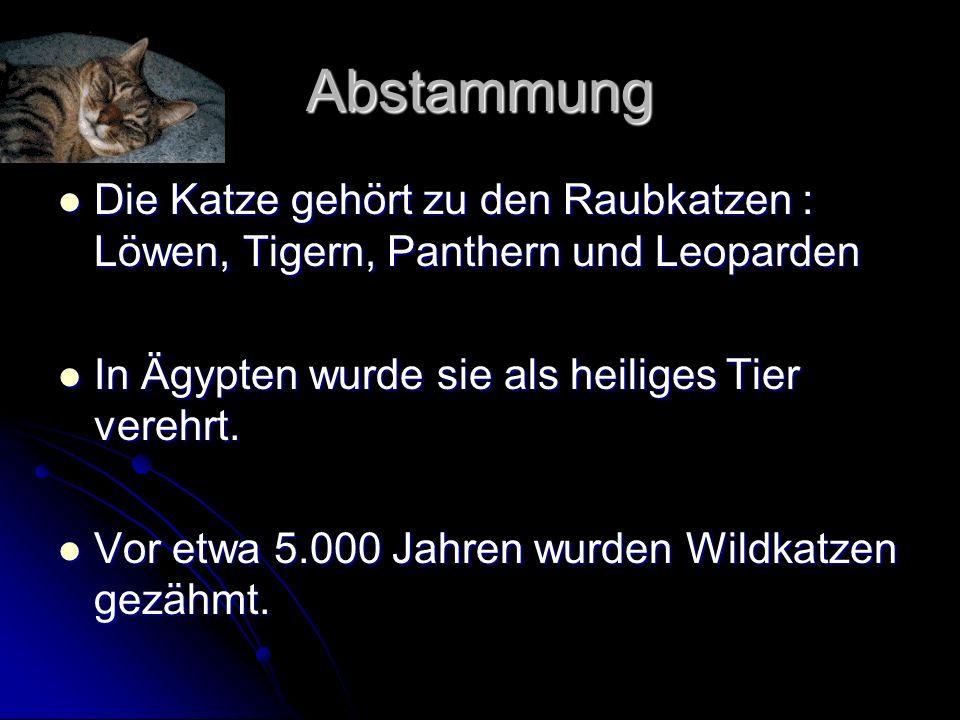 Abstammung Die Katze gehört zu den Raubkatzen : Löwen, Tigern, Panthern und Leoparden Die Katze gehört zu den Raubkatzen : Löwen, Tigern, Panthern und Leoparden In Ägypten wurde sie als heiliges Tier verehrt.