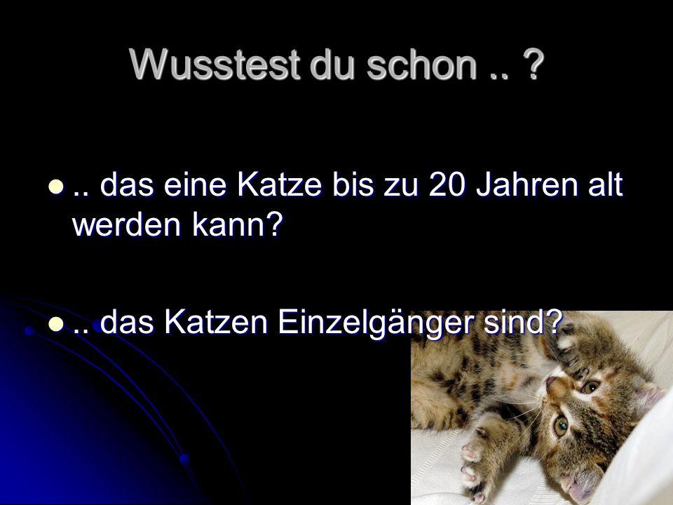Wusstest du schon..?.. das eine Katze bis zu 20 Jahren alt werden kann?..