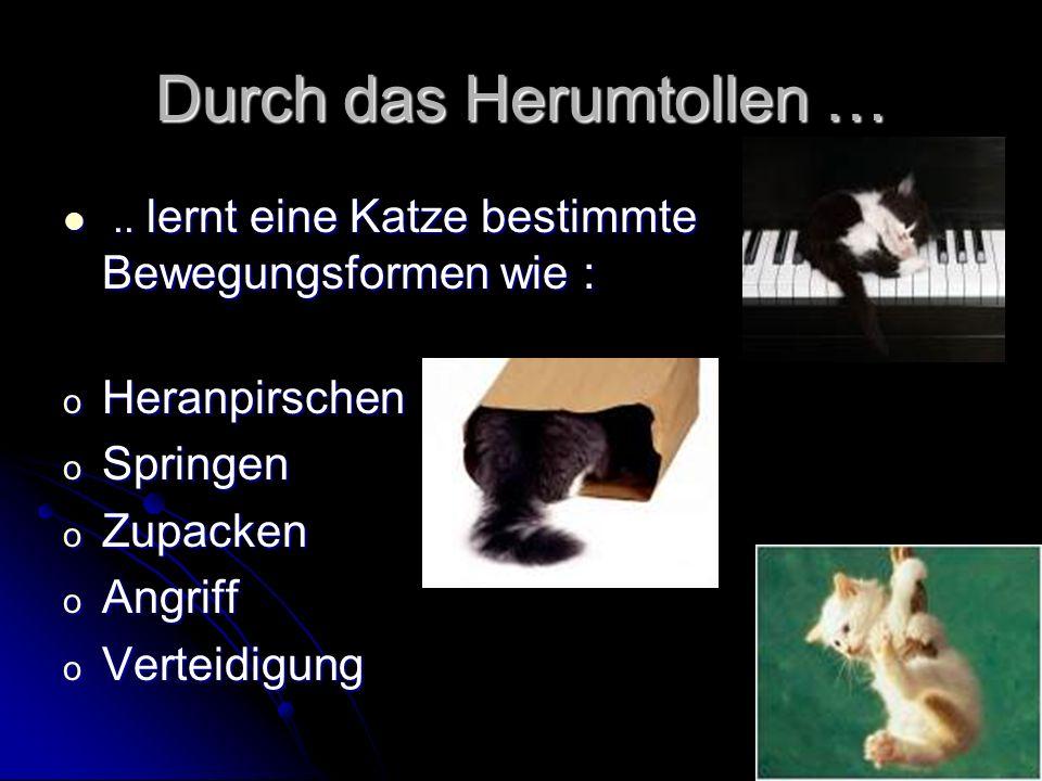 Durch das Herumtollen …..lernt eine Katze bestimmte Bewegungsformen wie :..