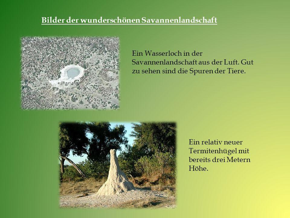 Ein Wasserloch in der Savannenlandschaft aus der Luft. Gut zu sehen sind die Spuren der Tiere. Ein relativ neuer Termitenhügel mit bereits drei Metern