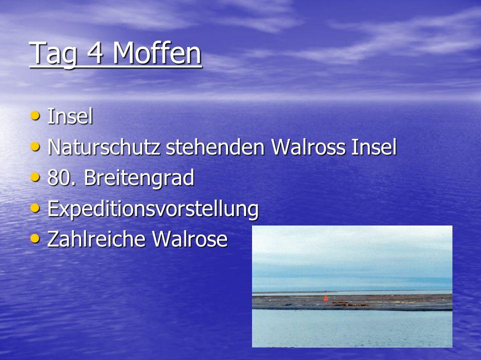 Tag 4 Moffen Insel Naturschutz stehenden Walross Insel 80. Breitengrad Expeditionsvorstellung Zahlreiche Walrose