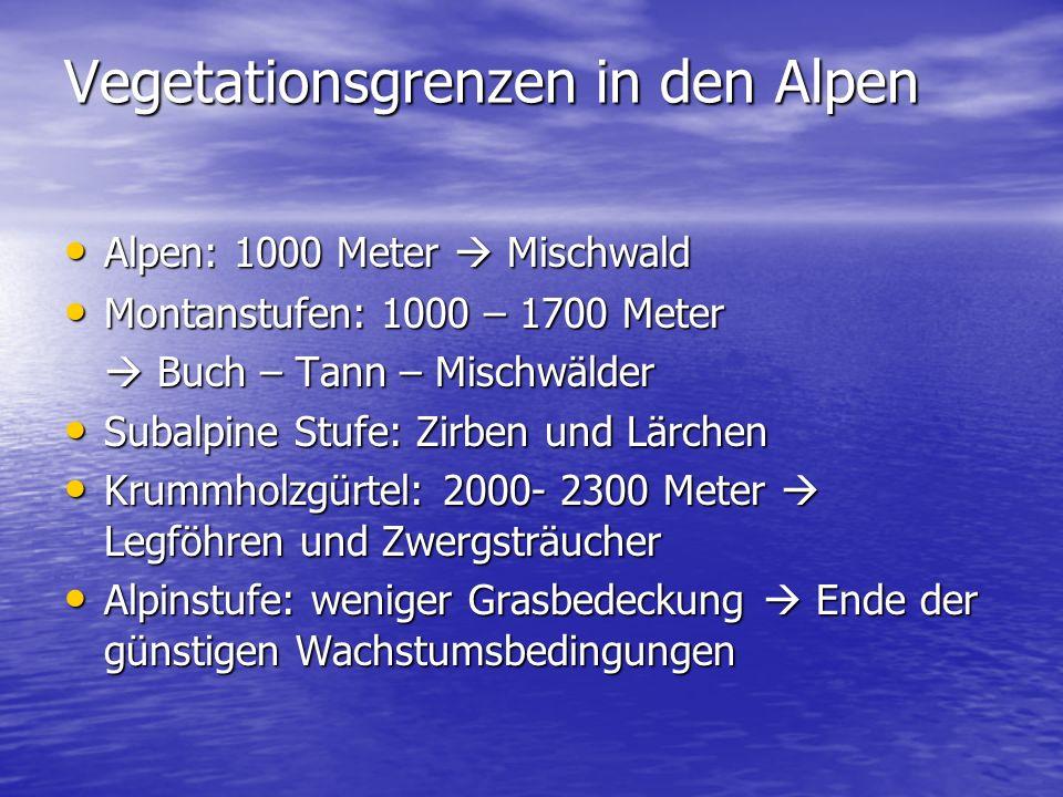Vegetationsgrenzen in den Alpen Alpen: 1000 Meter  Mischwald Alpen: 1000 Meter  Mischwald Montanstufen: 1000 – 1700 Meter Montanstufen: 1000 – 1700
