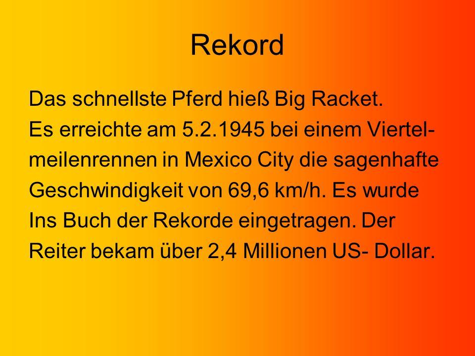 Rekord Das schnellste Pferd hieß Big Racket. Es erreichte am 5.2.1945 bei einem Viertel- meilenrennen in Mexico City die sagenhafte Geschwindigkeit vo