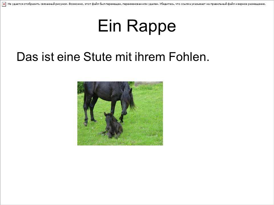 Ein Rappe Das ist eine Stute mit ihrem Fohlen.