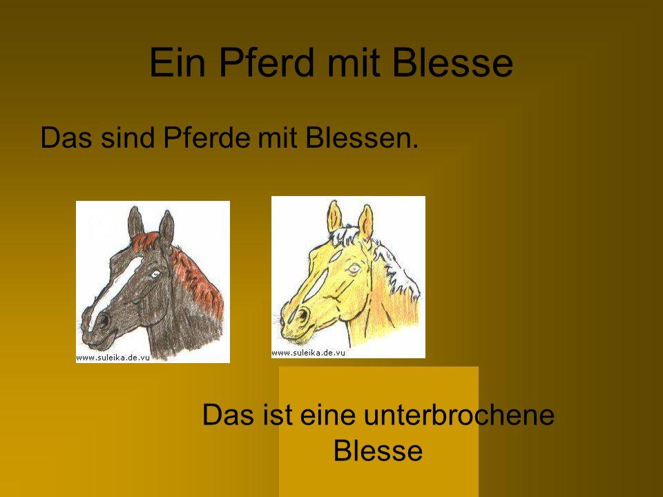 Ein Pferd mit Blesse Das sind Pferde mit Blessen. Das ist eine unterbrochene Blesse