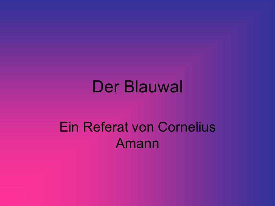 Der Blauwal Ein Referat von Cornelius Amann