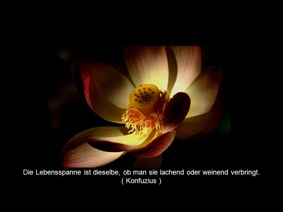 © by Huber, Hutter & Waibel Die Lebensspanne ist dieselbe, ob man sie lachend oder weinend verbringt. ( Konfuzius )