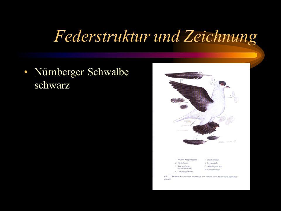 Federstruktur und Zeichnung Nürnberger Schwalbe schwarz