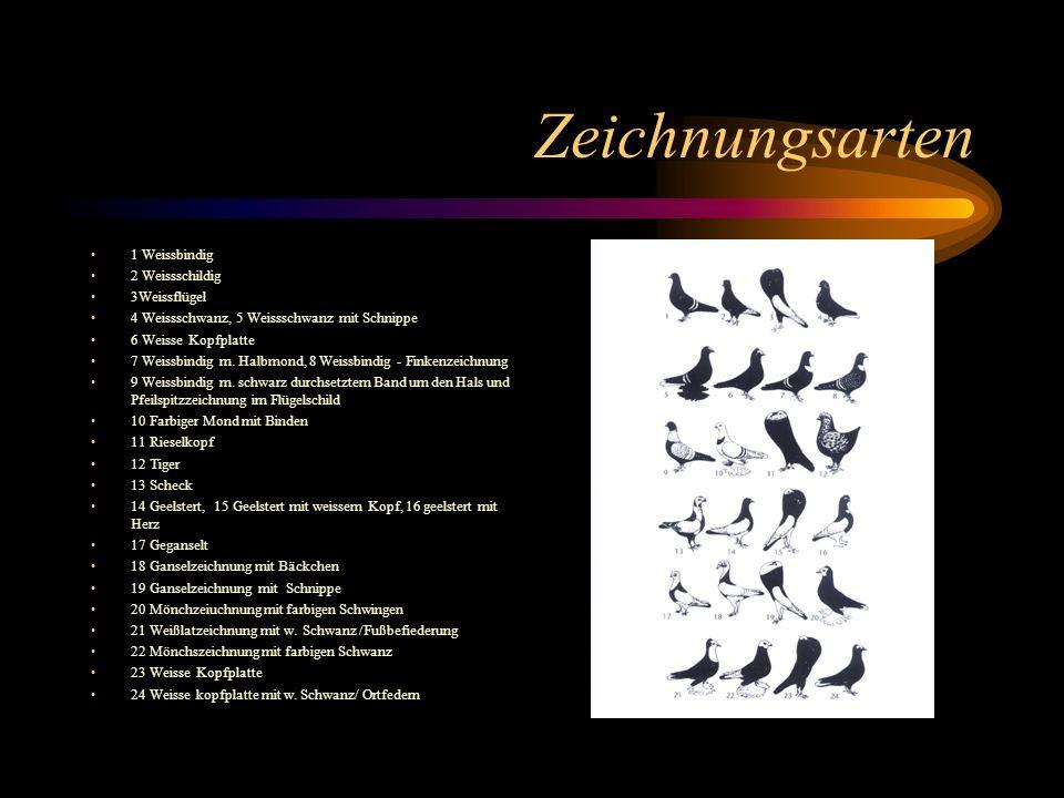 Zeichnungsarten 1 Weissbindig 2 Weissschildig 3Weissflügel 4 Weissschwanz, 5 Weissschwanz mit Schnippe 6 Weisse Kopfplatte 7 Weissbindig m. Halbmond,