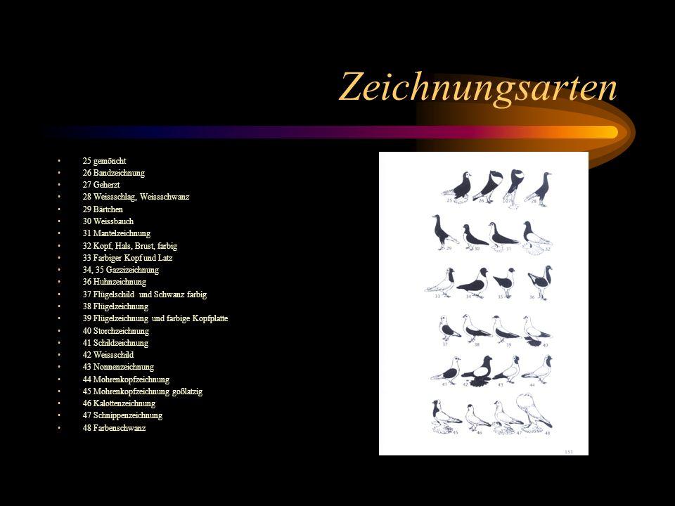 Zeichnungsarten 25 gemöncht 26 Bandzeichnung 27 Geherzt 28 Weissschlag, Weissschwanz 29 Bärtchen 30 Weissbauch 31 Mantelzeichnung 32 Kopf, Hals, Brust