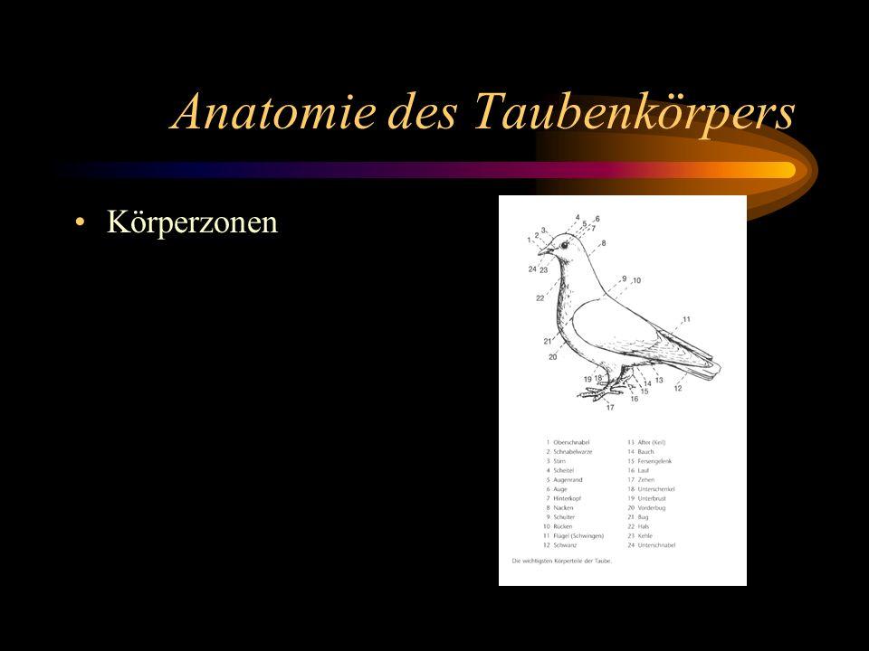 Anatomie des Taubenkörpers Körperzonen