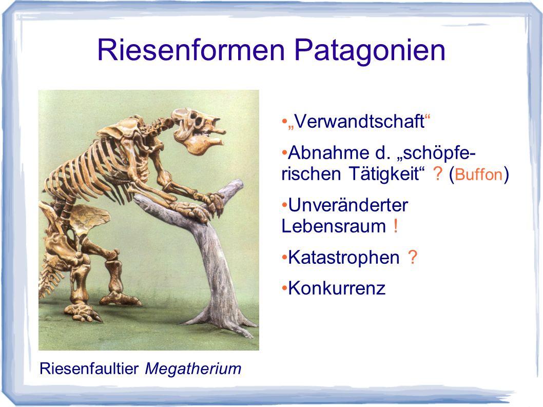 """Bedeutungen von 'Evolution' Evolution als """"Phänomen Evolution als """"Theorie Evolution als Erklärungsrahmen (""""Paradigma )"""