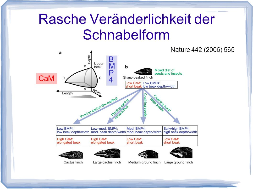 """""""Natürliche Zuchtwahl Vergleichspunkt Haustierzüchtung Bewertung durch die Umwelt Zielsetzung ?"""
