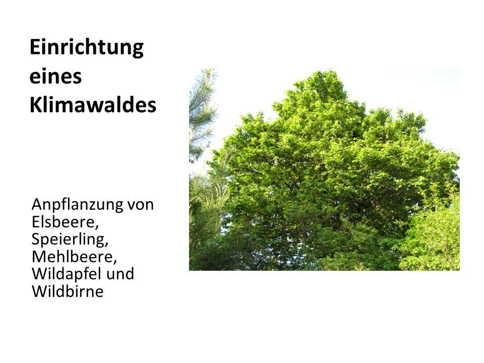 Einrichtung eines Klimawaldes Anpflanzung von Elsbeere, Speierling, Mehlbeere, Wildapfel und Wildbirne