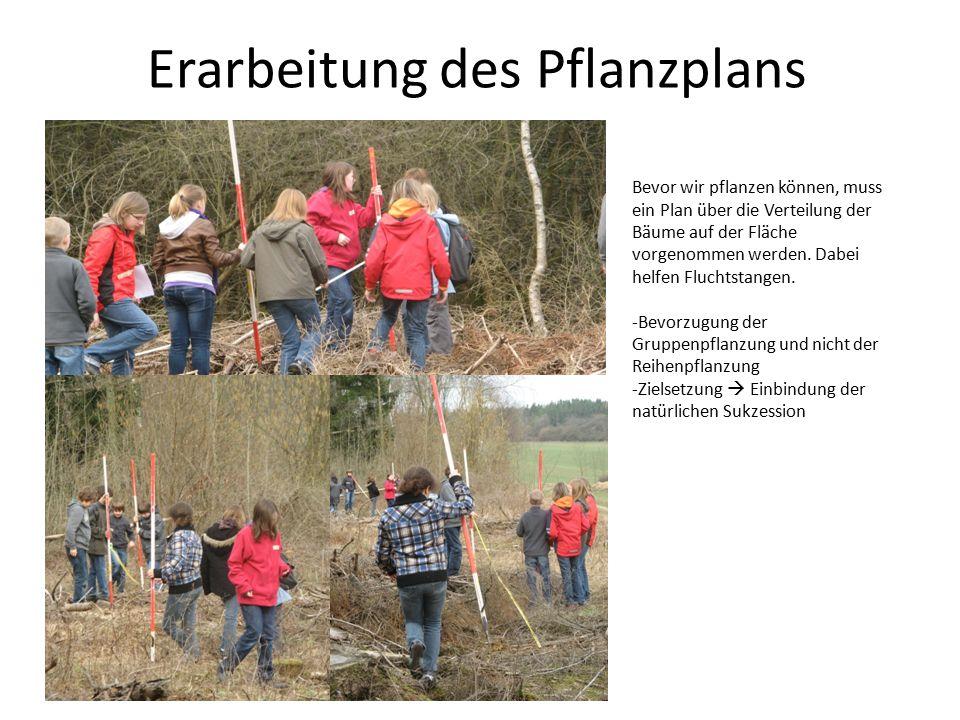 Erarbeitung des Pflanzplans Bevor wir pflanzen können, muss ein Plan über die Verteilung der Bäume auf der Fläche vorgenommen werden. Dabei helfen Flu
