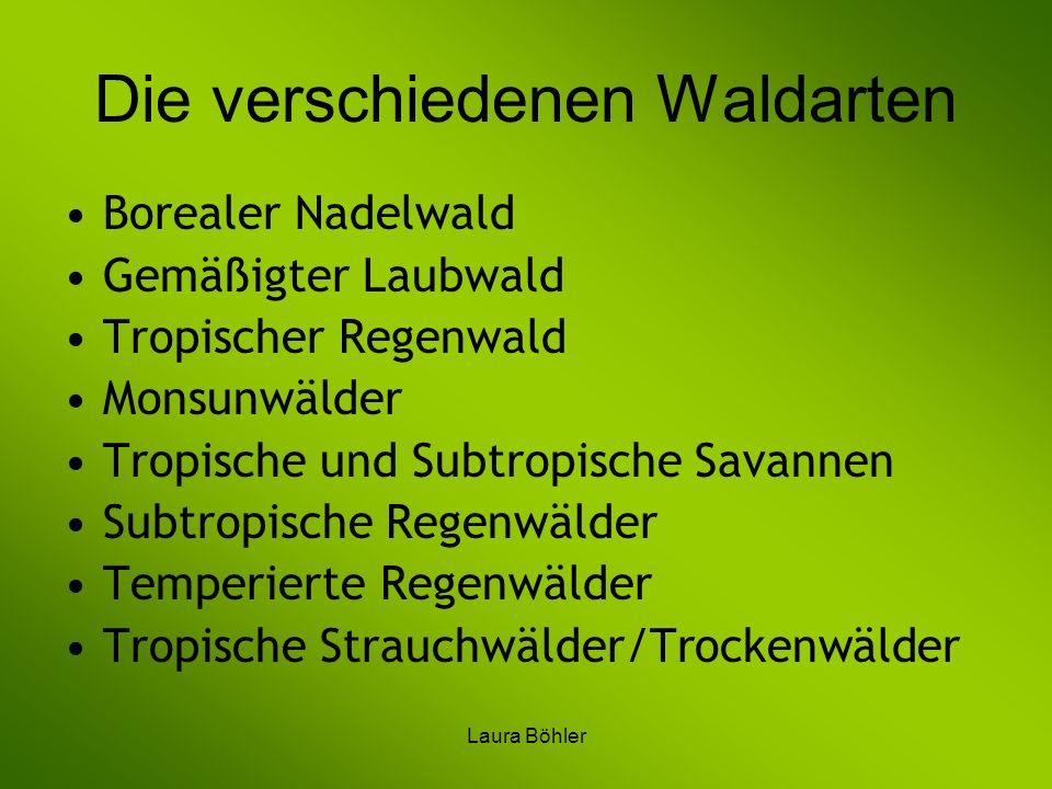 Laura Böhler Die verschiedenen Waldarten Borealer Nadelwald Gemäßigter Laubwald Tropischer Regenwald Monsunwälder Tropische und Subtropische Savannen