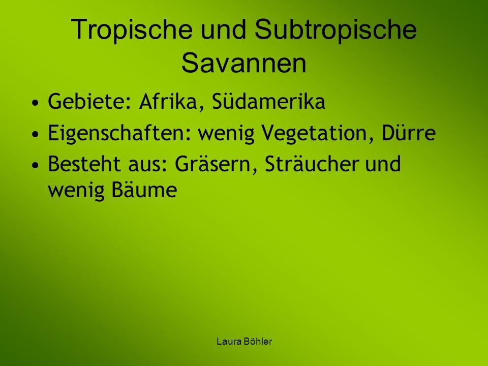 Laura Böhler Tropische und Subtropische Savannen Gebiete: Afrika, Südamerika Eigenschaften: wenig Vegetation, Dürre Besteht aus: Gräsern, Sträucher un