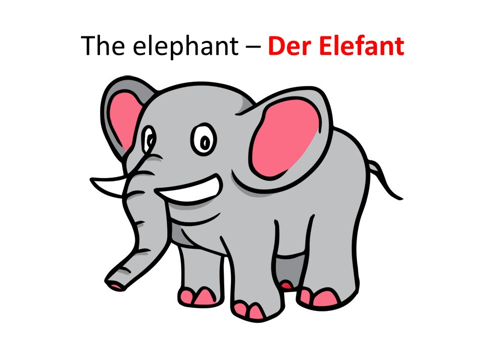 The elephant – Der Elefant